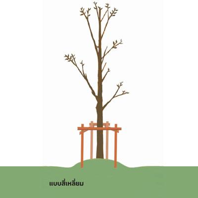 m garden 01 03 ช่วยชีวิตต้นไม้..หลังน้ำท่วม