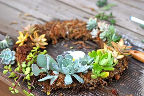 IMG 9864 DIY.Succulent Wreath ต้อนรับปีใหม่