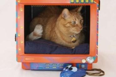 Cat bed...เตียงน้องเหมียวจากจอคอมพิวเตอร์เก่า(รุ่นโบราณ) 27 - รีไซเคิล