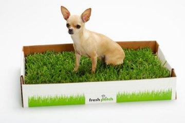 Fresh Patch ไม่มีสนามหญ้าก็ช่วยน้องหมาได้ 6 - grass