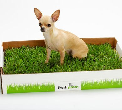 Fresh Patch ไม่มีสนามหญ้าก็ช่วยน้องหมาได้ 21 - grass