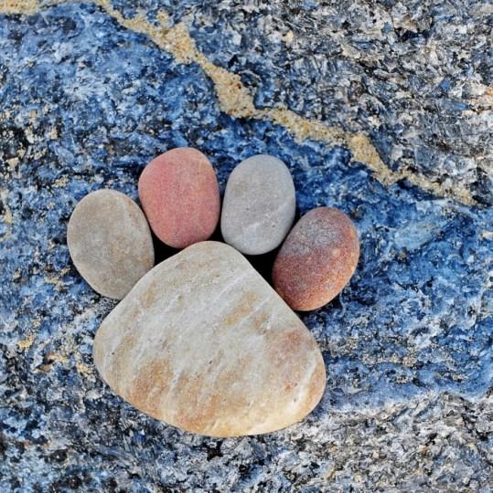 Paw Print by Iain Blake รอยเท้าจากก้อนหิน..โดย Iain Blake