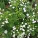 World travel with Hydrangea 29 - Flower
