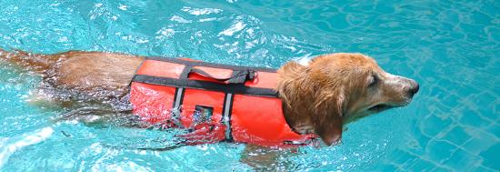 Screen Shot 2012 06 15 at 1.55.36 AM 550x189 iTube พาน้องหมามาว่ายน้ำที่สระใจกลางเมืองกันเถอะ