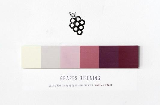 grapes 6 900 533x350 Shades of Change สีบอกอะไรได้มากกว่าที่คิด!!