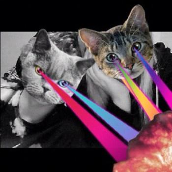 566ed70a9a4511e19dc71231380fe523 7 350x350 CATWANG แอปที่ใครๆก็เป็นแมว