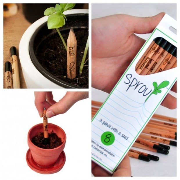image 750x750 Sprout..ดินสอที่กลายร่างเป็นต้นไม้เมื่อเขียนต่อไม่ได้แล้ว