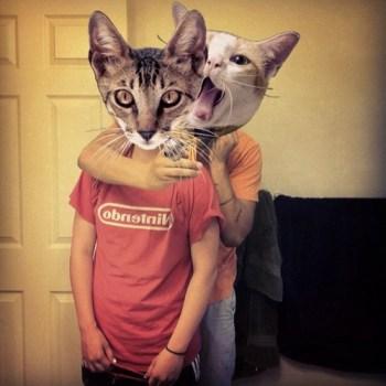 tumblr m5mc2ewPt61qeg0eno1 500 350x350 CATWANG แอปที่ใครๆก็เป็นแมว