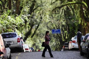 """ถนนสายต้นไม้ ที่ประเทศบราซิล """"Rua De Carvalho Goncal"""" 21 - tree"""