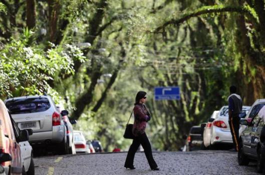 11999173 529x350 ถนนสายต้นไม้ ที่ประเทศบราซิล Rua De Carvalho Goncal