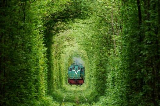 25550926 235836 อุโมงค์สีเขียว.. อุโมงค์แห่งรัก.. เส้นทางในธรรมชาติสำหรับรถไฟ และคนรักกัน..ที่สุดแสนโรแมนติก