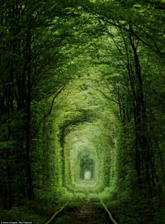 25550927 165736 อุโมงค์สีเขียว.. อุโมงค์แห่งรัก.. เส้นทางในธรรมชาติสำหรับรถไฟ และคนรักกัน..ที่สุดแสนโรแมนติก