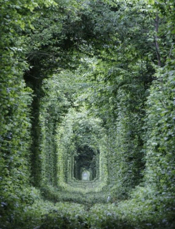 25550927 165825 อุโมงค์สีเขียว.. อุโมงค์แห่งรัก.. เส้นทางในธรรมชาติสำหรับรถไฟ และคนรักกัน..ที่สุดแสนโรแมนติก