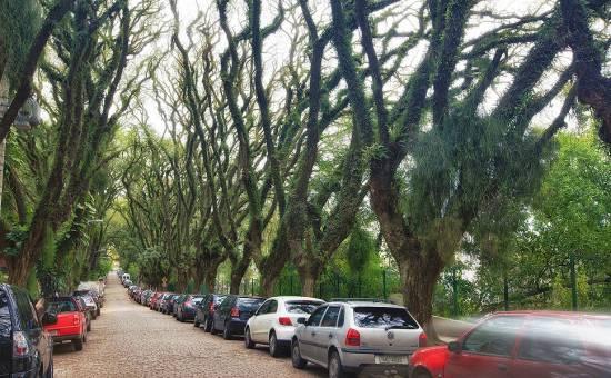 brazil3 550x340 ถนนสายต้นไม้ ที่ประเทศบราซิล Rua De Carvalho Goncal