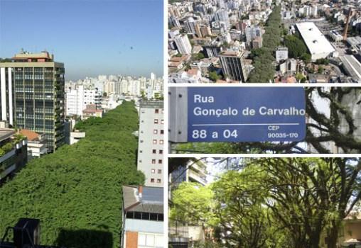 """ถนนสายต้นไม้ ที่ประเทศบราซิล """"Rua De Carvalho Goncal"""" 4 - tree"""