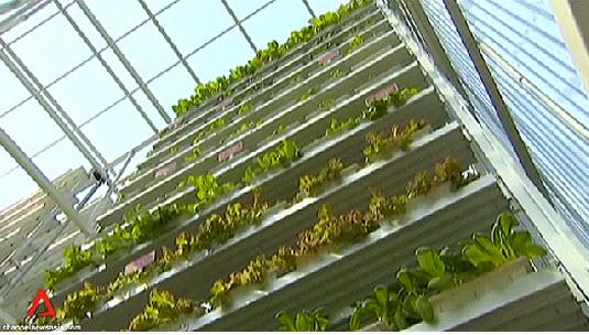 สิงคโปร์ ทำสวนผักแนวตั้งเพื่อการค้าเป็นครั้งแรกในโลก 15 - vertical farm