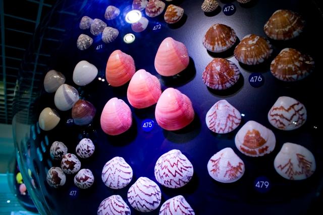 Bangkok Seashall Museum สู่โลกมหัศจรรย์ของเปลือกหอย ณ ถนนสีลม  13 - Bangkok Seashall Museum