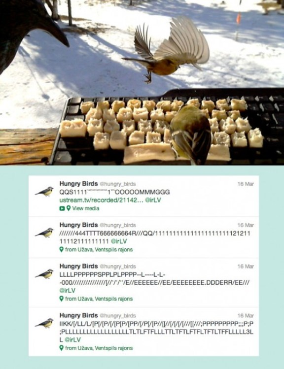 25551201 135540 AMAZING! Real birds tweet on twitter