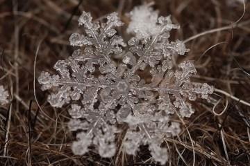ภาพถ่าย snowflake ของจริงในธรรมชาติ..ยกนิ้วให้กับความพยายามของช่างภาพ
