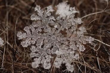 ภาพถ่าย snowflake ของจริงในธรรมชาติ..ยกนิ้วให้กับความพยายามของช่างภาพ 22 - photography