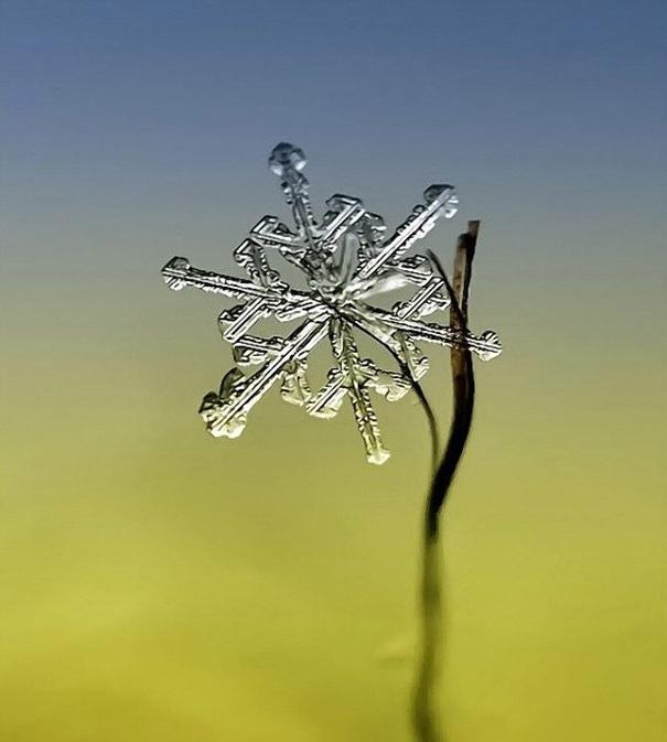 25551218 081942 ภาพถ่าย snowflake ของจริงในธรรมชาติ..ยกนิ้วให้กับความพยายามของช่างภาพ