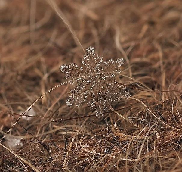 25551218 082019 ภาพถ่าย snowflake ของจริงในธรรมชาติ..ยกนิ้วให้กับความพยายามของช่างภาพ