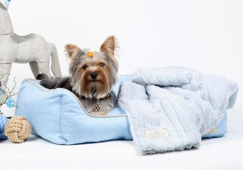 Coccola Pet Boutique แหล่งช็อปปิ้ง เพื่อเอาใจคนรักสัตว์เลี้ยง  15 -