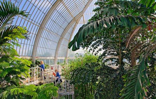 Palm House 0122 550x350 Palm House at Kew Garden ศูนย์รวมปาล์มจากทั่วโลก