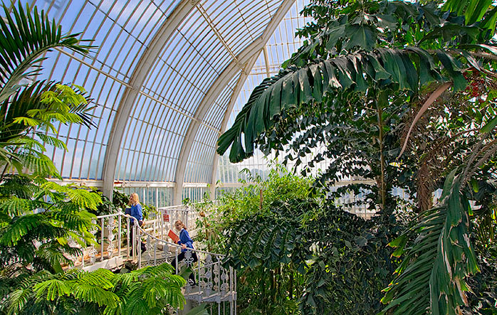 Palm House at Kew Garden ศูนย์รวมปาล์มจากทั่วโลก 14 - Palm House at Kew Garden