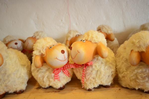 Swiss Sheep Farm..ฟาร์มแกะที่ชะอำ 30 - swiss sheep farm