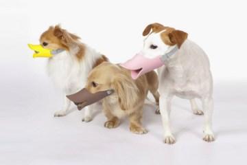 """""""Quack"""" แคว๊ก!! ตะกร้อครอบปากน้องหมาสุดฮา"""