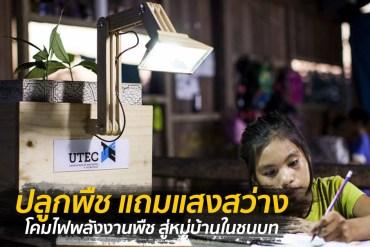 เพียงปลูกพืชก็สว่างได้ โคมไฟพลังงานพืช สู่หมู่บ้านในชนบท 13 - โคมไฟ
