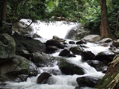 25560109 083132 เที่ยวน้ำตก ชมผีเสื้อ ดูช้างป่า ที่ป่าละอู ..ใกล้ๆหัวหิน