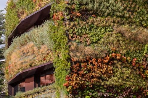 25560120 190716 บ้านที่คลุมด้วยต้นไม้ 4,500 ต้น แบบสวนแนวตั้ง