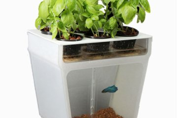 Self-Cleaning Fish Tank Garden
