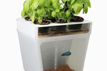 Self-Cleaning Fish Tank Garden 10 - fish