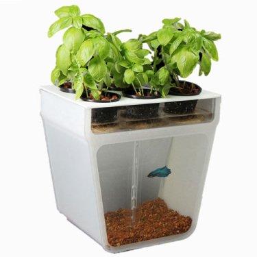 Aquaponics self cleaning fish tank garden 375x375 Self Cleaning Fish Tank Garden