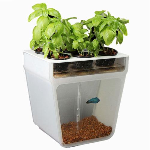 Self-Cleaning Fish Tank Garden 13 - fish tank