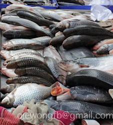 แผงปลา
