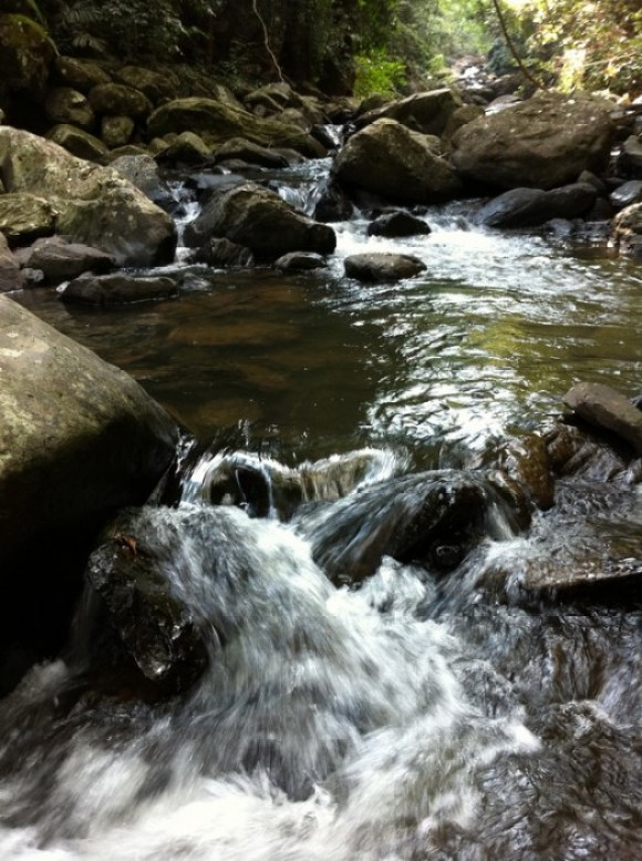 IMG 2014r2 เที่ยวน้ำตก ชมผีเสื้อ ดูช้างป่า ที่ป่าละอู ..ใกล้ๆหัวหิน