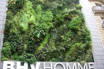 Living wall..สวนแนวตั้ง ที่ไม่ได้เป็นแค่ชิ้นงานศิลปะขนาดใหญ่ แต่ยังเป็นผนังที่มีชีวิตและลมหายใจ ให้ความสุขกับผู้พบเห็น
