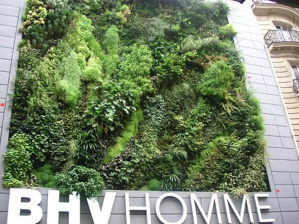 Living wall..สวนแนวตั้ง ที่ไม่ได้เป็นแค่ชิ้นงานศิลปะขนาดใหญ่ แต่ยังเป็นผนังที่มีชีวิตและลมหายใจ ให้ความสุขกับผู้พบเห็น 23 - GREENERY