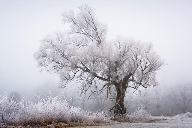 25560308 083515 A Frosty Morning..ภาพยามเช้าที่ห่มคลุมด้วยน้ำค้างแข็ง..สวยงาม สงบนิ่ง