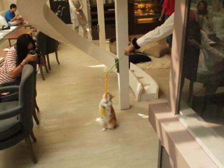556922 215177238616516 1225996415 n 450x337 PURR CAT CAFE CLUB คลับแมวเหมียว