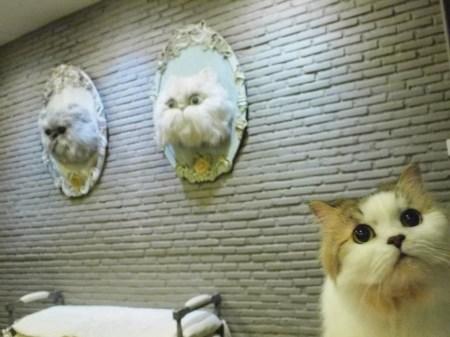 62112 255276641273242 199441977 n 450x337 PURR CAT CAFE CLUB คลับแมวเหมียว