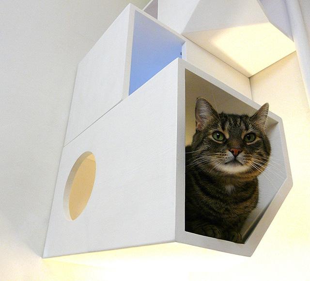 25560422 161519 Catissa – บ้านสไตล์โมเดิร์น 4 ชั้น สำหรับแมวเหมียว
