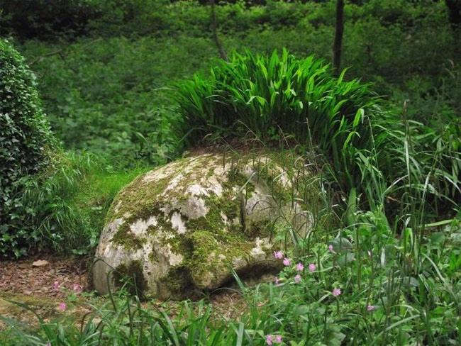 25560430 140017 The Lost Gardens of Heligan...สวนอายุ 400ปี ที่หายไปจากโลกนี้เกือบ 100ปี