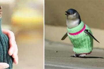 Knit for penguins โครงการช่วยเหลือถักโครเชต์ มอบอุ่นให้เพนกวิน