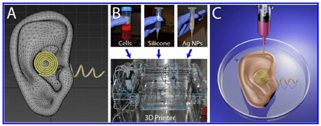 25560507 160914 3D Printing พิมพ์หูที่สามารถฟังเสียงได้ดีกว่า..และยังพิมพ์เนื้อเยื่ออื่นๆในร่างกาย...น่าทึ่งมากๆ