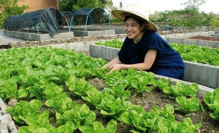 02 450x274 สนุกกับวิถีชีวิตชาวนาชาวไร่ โครงการเกษตรอินทรีย์สนามบินสุโขทัย